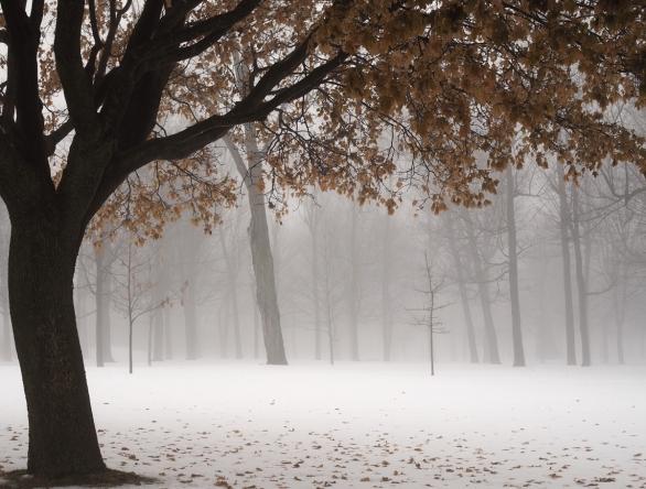 brumeux janvier - misty january