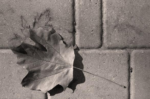 des traces de l'automne - fallprints
